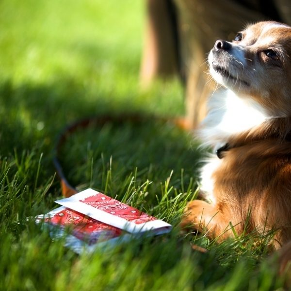 Small dog laying next to a completed Duck Tape treat bag
